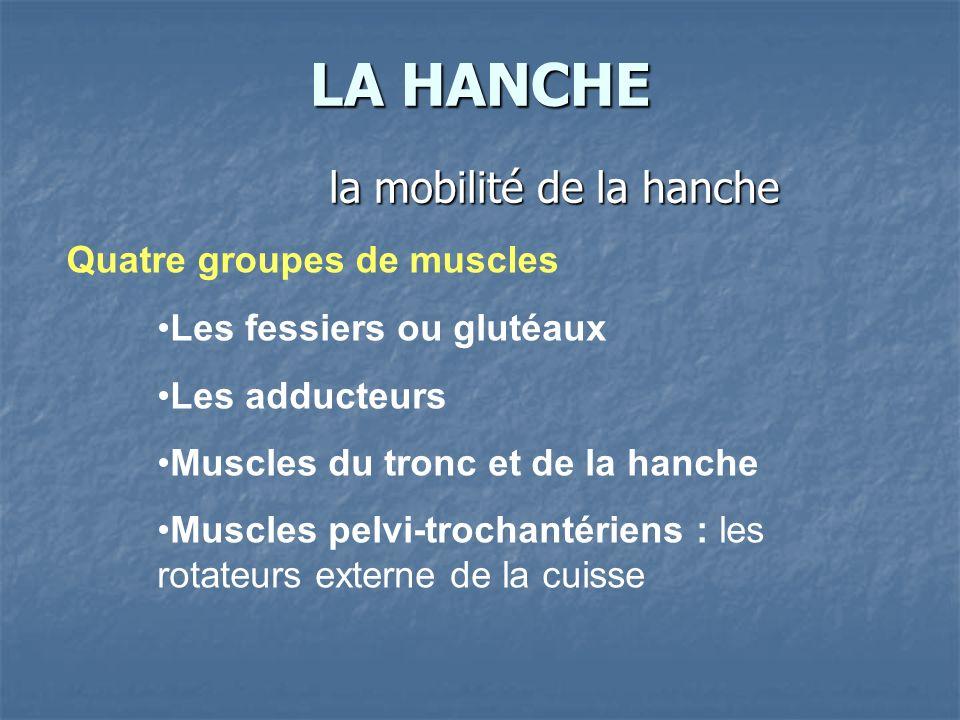 LA HANCHE la mobilité de la hanche Quatre groupes de muscles Les fessiers ou glutéaux Les adducteurs Muscles du tronc et de la hanche Muscles pelvi-tr