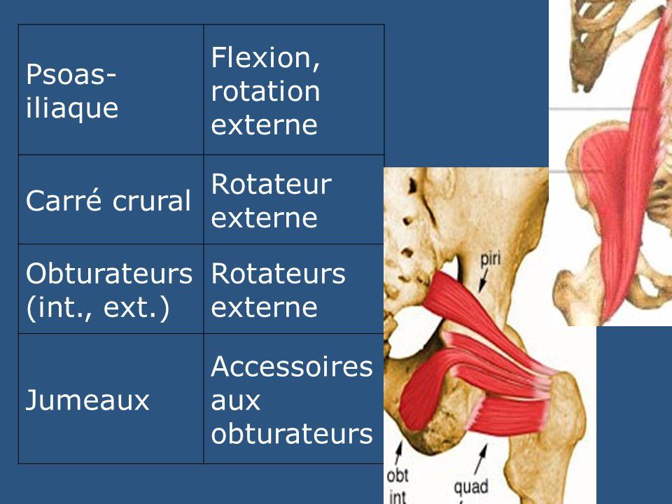 Psoas- iliaque Flexion, rotation externe Carré crural Rotateur externe Obturateurs (int., ext.) Rotateurs externe Jumeaux Accessoires aux obturateurs