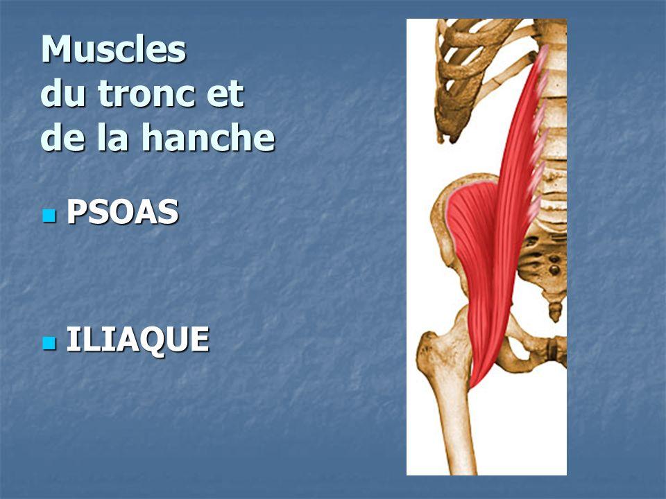 Muscles du tronc et de la hanche PSOAS PSOAS ILIAQUE ILIAQUE