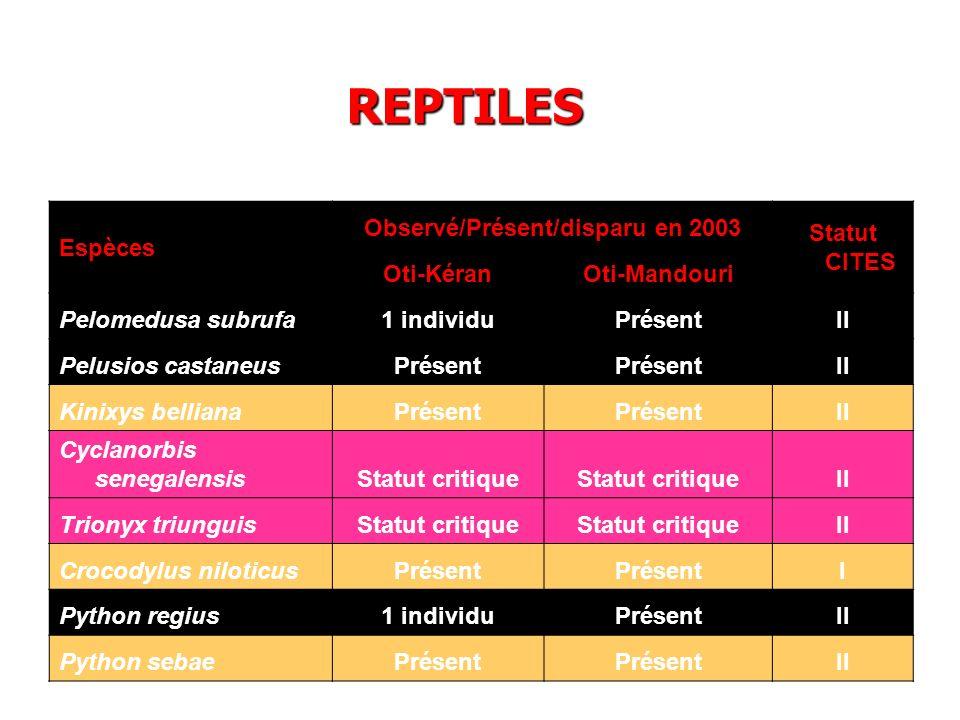 Espèces Observé/Présent/disparu en 2003 Statut CITES Oti-KéranOti-Mandouri Pelomedusa subrufa1 individuPrésentII Pelusios castaneusPrésent II Kinixys