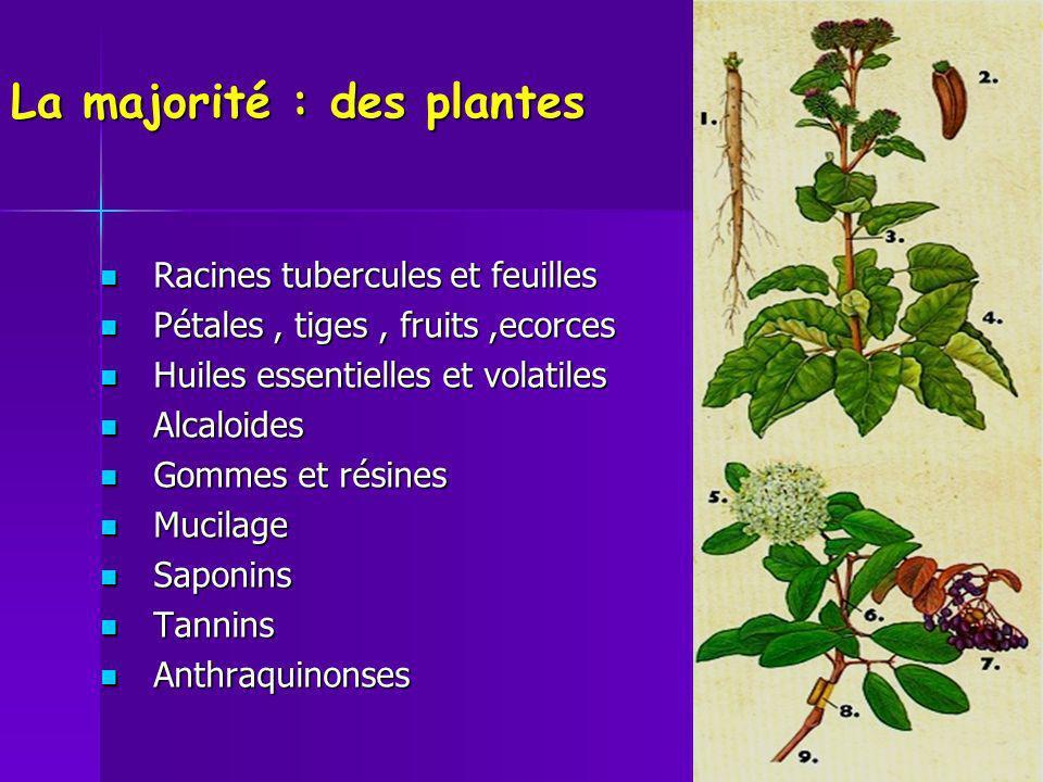 La majorité : des plantes Racines tubercules et feuilles Racines tubercules et feuilles Pétales, tiges, fruits,ecorces Pétales, tiges, fruits,ecorces