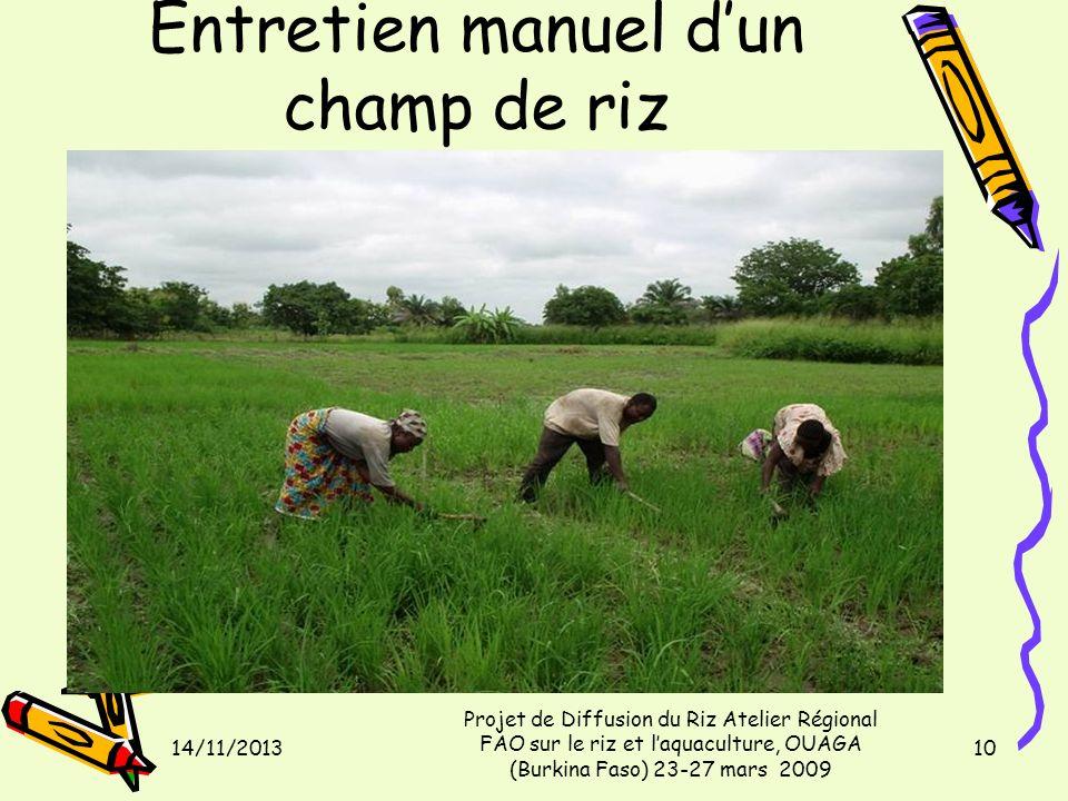 Entretien manuel dun champ de riz 14/11/2013 Projet de Diffusion du Riz Atelier Régional FAO sur le riz et laquaculture, OUAGA (Burkina Faso) 23-27 ma
