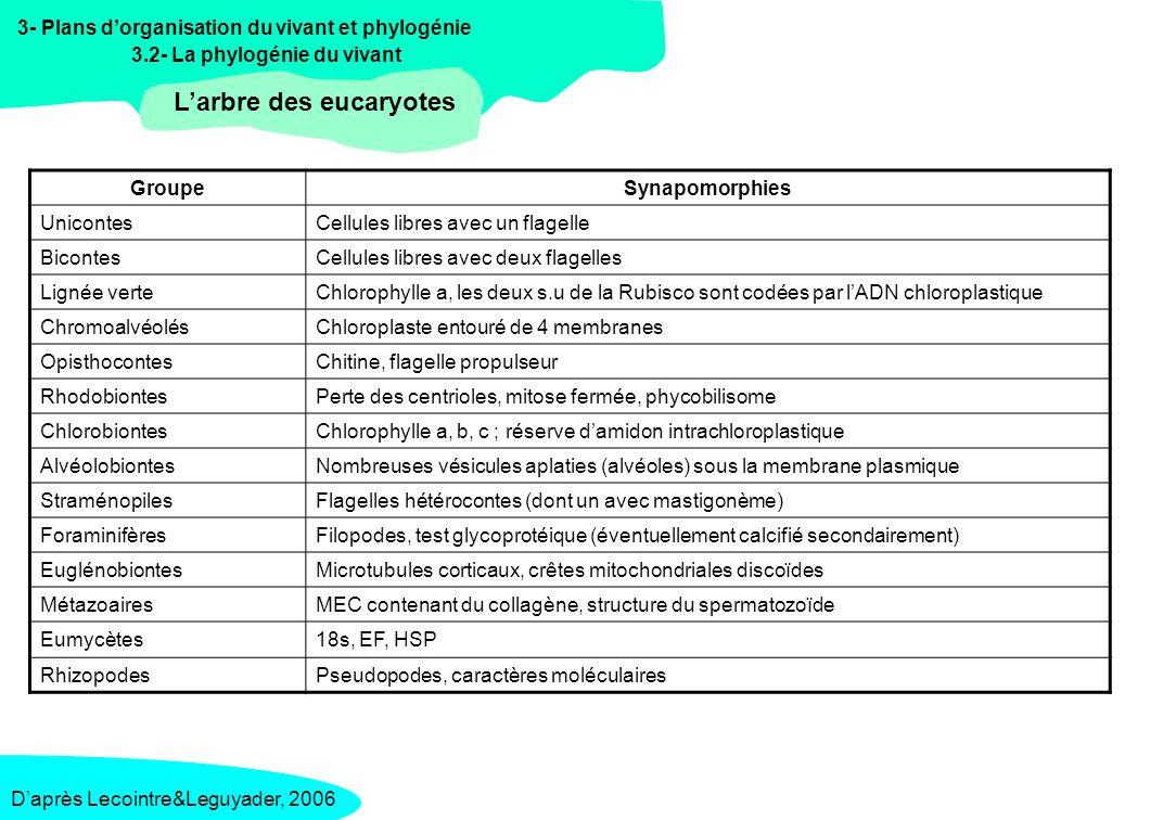 3- Plans dorganisation du vivant et phylogénie 3.2- La phylogénie du vivant Larbre des eucaryotes Daprès Lecointre&Leguyader, 2006 / Raven, 2000 ESPECE Nom latin ESPECE Nom français CARACTERES Plasmopora viticolaMildiou de la vigne Flagelles hétérocontes, paroi cellulosique Puccinia graminisRouille du bléFormation de basidiospores, paroi contenant de la chitine, mycélium à cloison perforée.