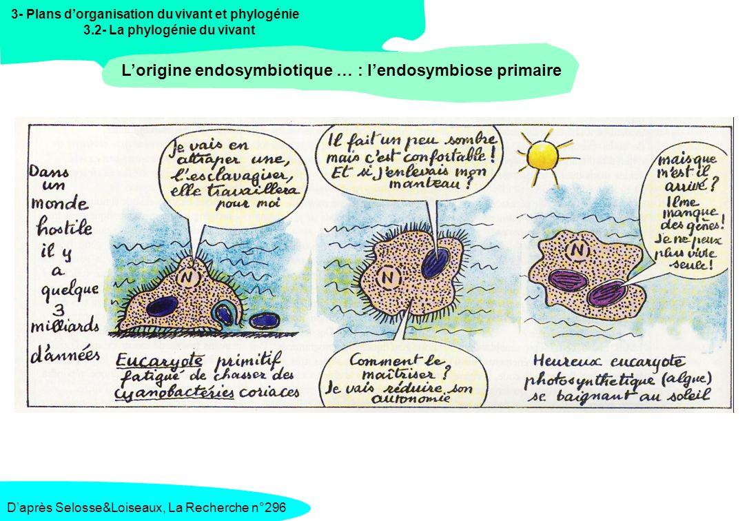3- Plans dorganisation du vivant et phylogénie 3.2- La phylogénie du vivant Lorigine endosymbiotique … : lendosymbiose secondaire Daprès Selosse&Loiseaux, La Recherche n°296