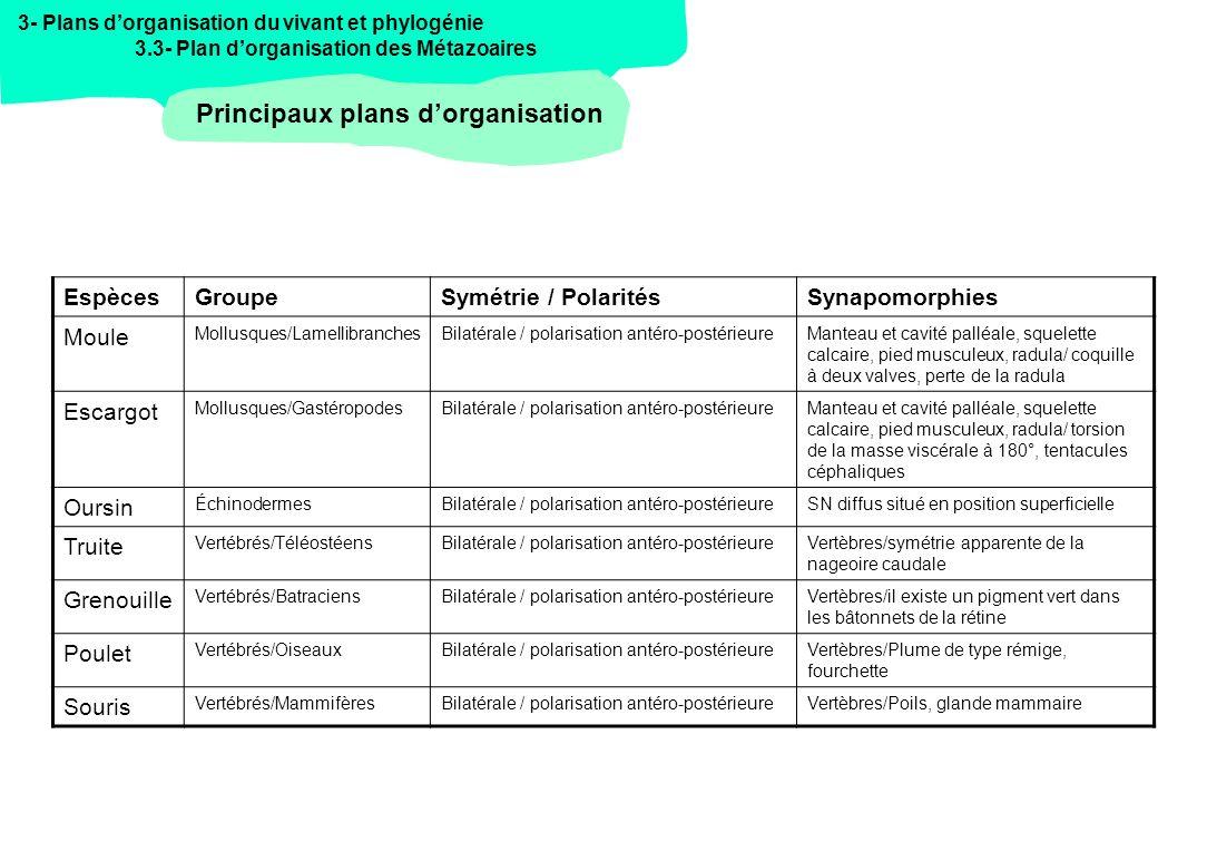 3- Plans dorganisation du vivant et phylogénie 3.3- Plan dorganisation des Métazoaires La classification des Métazoaires Daprès Lecointre&Leguyader, 2006