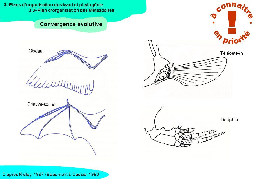 3- Plans dorganisation du vivant et phylogénie 3.3- Plan dorganisation des Métazoaires Convergence évolutive Daprès Eckert, 1999