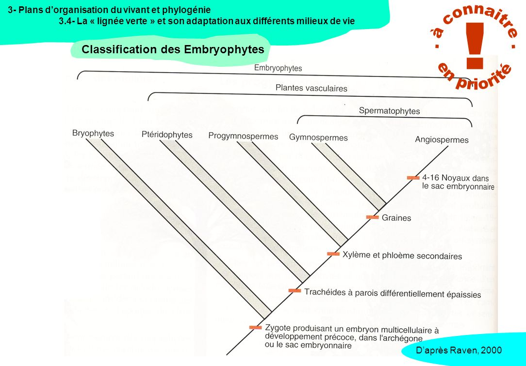 3- Plans dorganisation du vivant et phylogénie 3.4- La « lignée verte » et son adaptation aux différents milieux de vie Classification des Embryophytes Daprès Lecointre&Leguyader, 2006