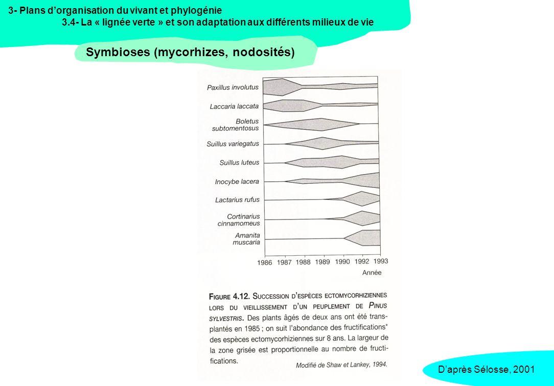 3- Plans dorganisation du vivant et phylogénie 3.4- La « lignée verte » et son adaptation aux différents milieux de vie Symbioses (mycorhizes, nodosit