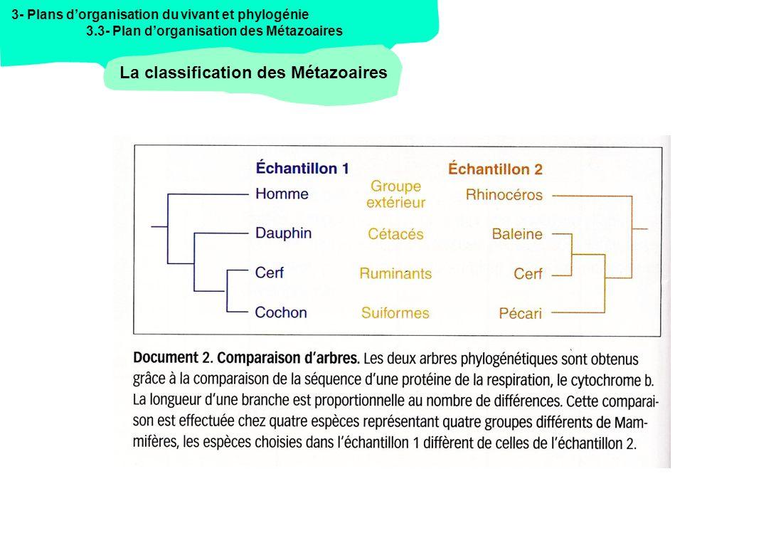 3- Plans dorganisation du vivant et phylogénie 3.3- Plan dorganisation des Métazoaires La classification des Métazoaires
