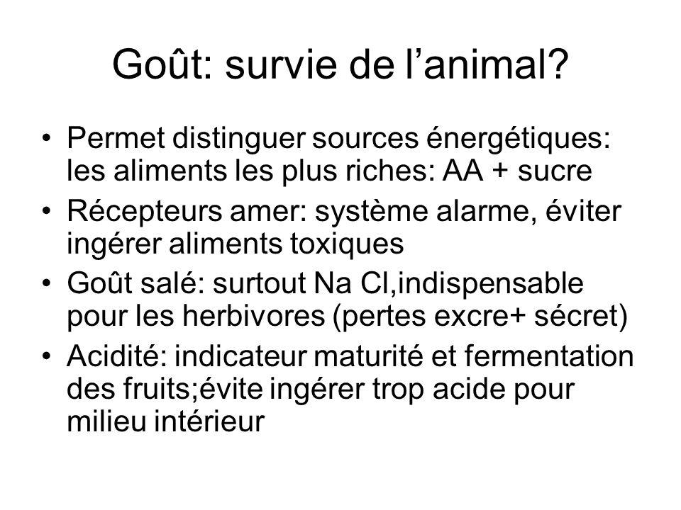 Goût: survie de lanimal? Permet distinguer sources énergétiques: les aliments les plus riches: AA + sucre Récepteurs amer: système alarme, éviter ingé