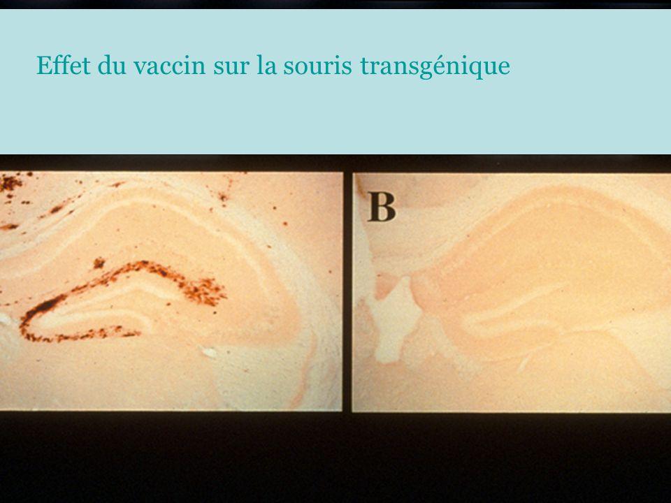 Effet du vaccin sur la souris transgénique Chez la souris Tg Effet du vaccin sur la souris transgénique
