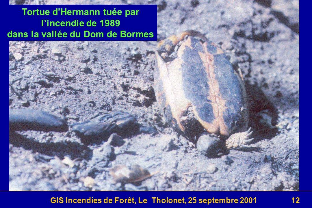 GIS Incendies de Forêt, Le Tholonet, 25 septembre 200112 Tortue dHermann tuée par lincendie de 1989 dans la vallée du Dom de Bormes