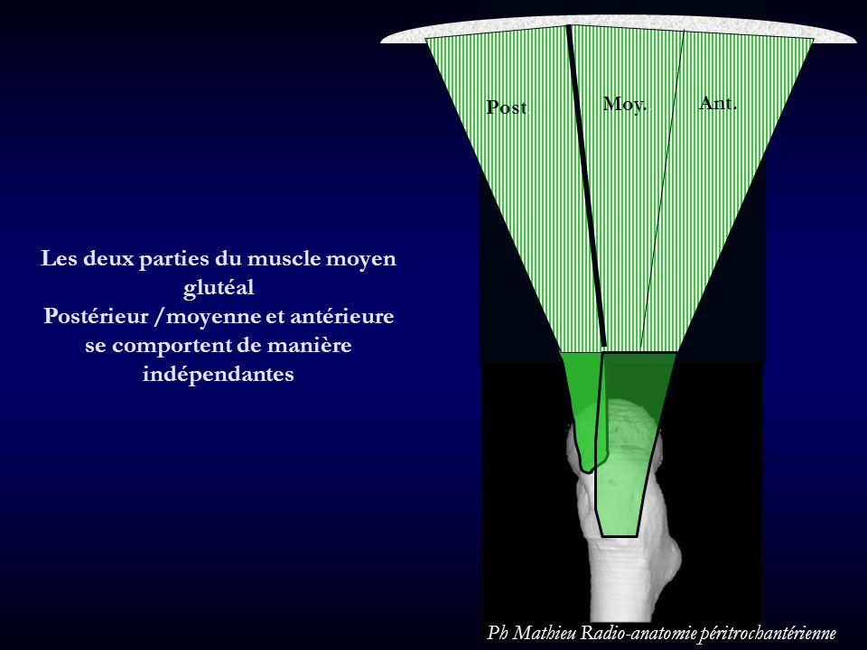 Les deux parties du muscle moyen glutéal Postérieur /moyenne et antérieure se comportent de manière indépendantes Post Moy Ant Post. Moy.. Ant. Ph Mat
