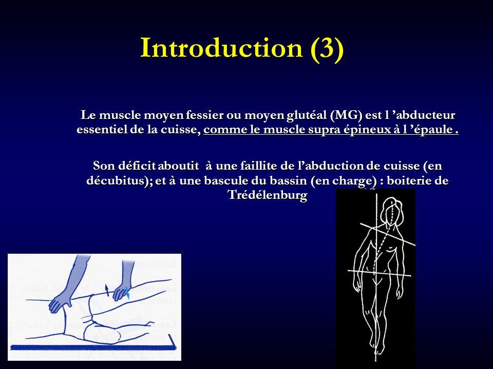 Introduction (3) Le muscle moyen fessier ou moyen glutéal (MG) est l abducteur essentiel de la cuisse, comme le muscle supra épineux à l épaule. Son d