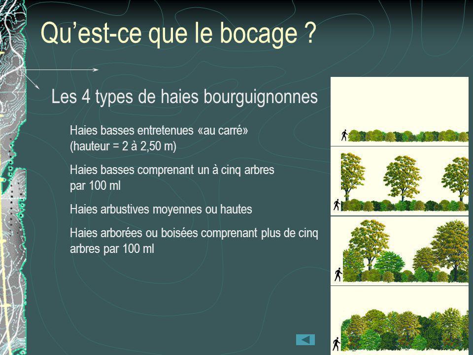 Quest-ce que le bocage ? Les 4 types de haies bourguignonnes Haies basses entretenues «au carré» (hauteur = 2 à 2,50 m) Haies basses comprenant un à c