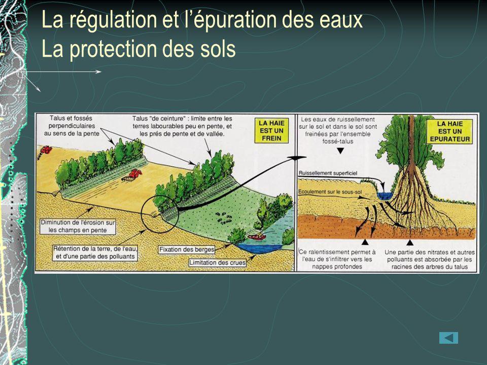 La régulation et lépuration des eaux La protection des sols
