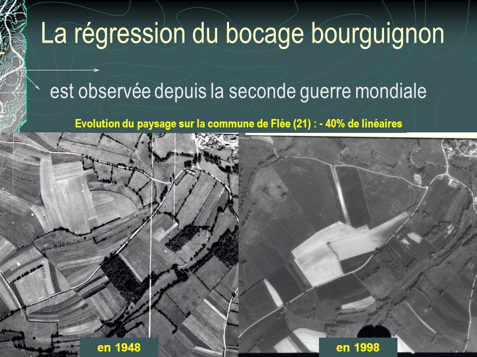 La régression du bocage bourguignon est observée depuis la seconde guerre mondiale Evolution du paysage sur la commune de Flée (21) : - 40% de linéair