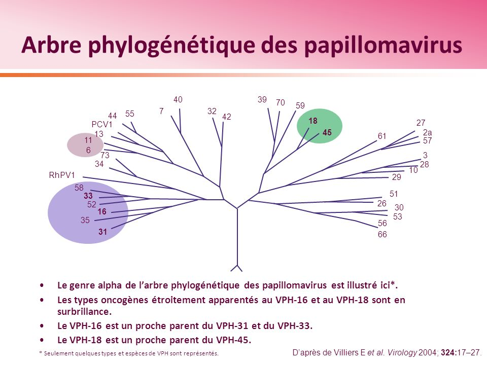 Lincidence cumulative des infections par le VPH diminue avec lâge, mais demeure importante même dans les tranches dâge supérieures 80 % des femmes seront infectées par le VPH au cours de leur vie Risque cumulatif à 5 ans de toute infection par le VPH, selon lâge Risque cumulatif à 5 ans dinfection par le VPH (%) 50 40 30 20 10 0 Âge au départ 15–19 20–24 25–29 30–44 45+ 012345 Durée du suivi (ans) Dans environ 75 % des cas, linfection sera causée par un VPH oncogène.