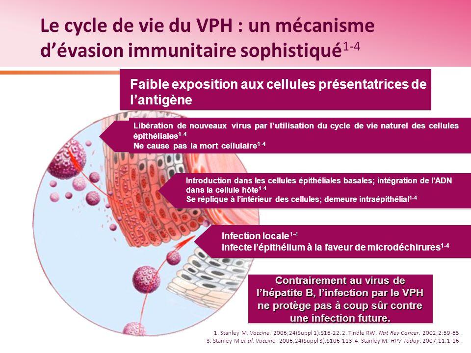 Le cycle de vie du VPH : un mécanisme dévasion immunitaire sophistiqué 1-4 1. Stanley M. Vaccine. 2006;24(Suppl 1):S16-22. 2. Tindle RW. Nat Rev Cance