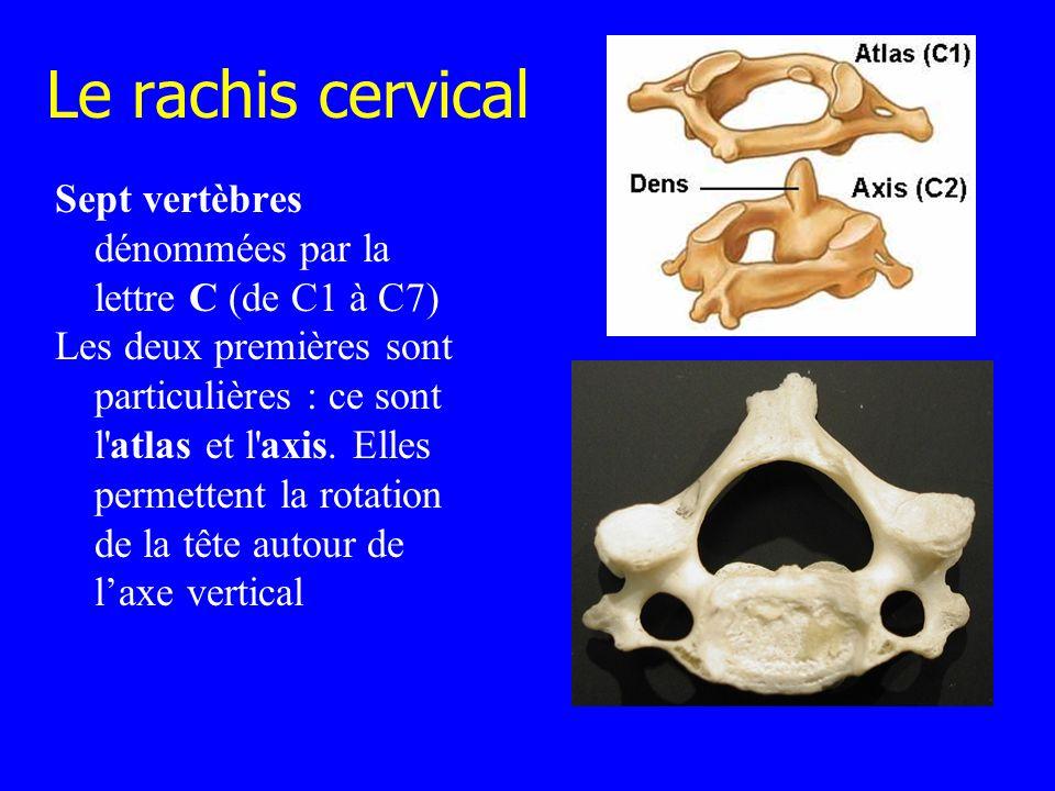 Le rachis cervical Sept vertèbres dénommées par la lettre C (de C1 à C7) Les deux premières sont particulières : ce sont l'atlas et l'axis. Elles perm