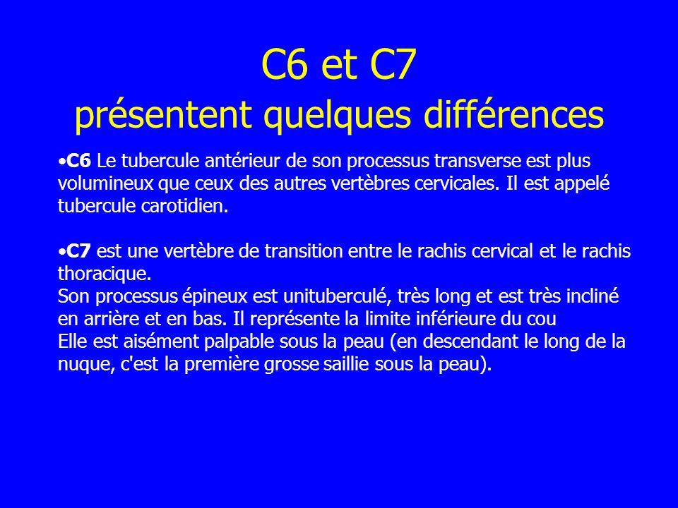 C6 et C7 présentent quelques différences C6 Le tubercule antérieur de son processus transverse est plus volumineux que ceux des autres vertèbres cervi