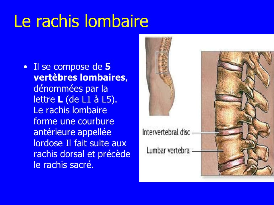 Le rachis lombaire Il se compose de 5 vertèbres lombaires, dénommées par la lettre L (de L1 à L5). Le rachis lombaire forme une courbure antérieure ap