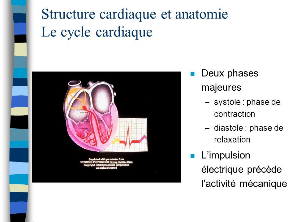 n Deux phases majeures –systole : phase de contraction –diastole : phase de relaxation n Limpulsion électrique précède lactivité mécanique Structure c