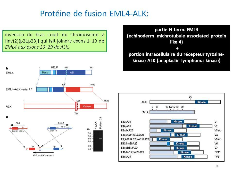 20 Protéine de fusion EML4-ALK: partie N-term. EML4 (echinoderm michrotubule associated protein like 4) + portion intracellulaire du récepteur tyrosin