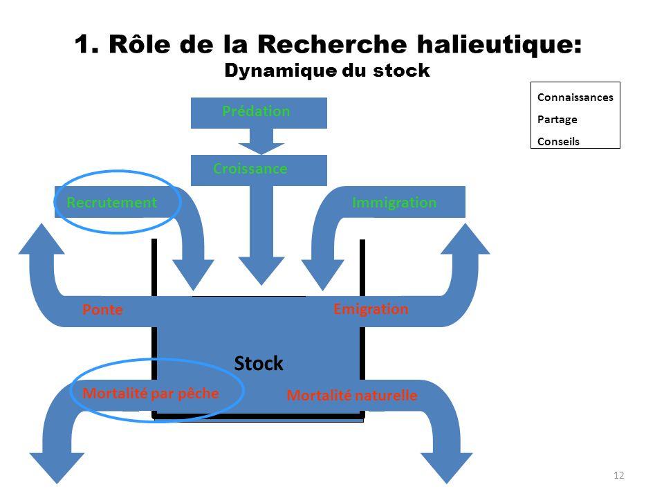 12 1. Rôle de la Recherche halieutique: Dynamique du stock RecrutementImmigration Stock Mortalité naturelle Mortalité par pêche Emigration Croissance