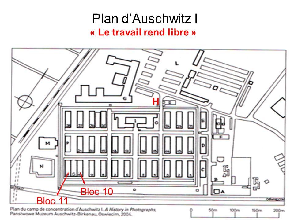 Plan dAuschwitz I H « Le travail rend libre » Bloc 10 Bloc 11