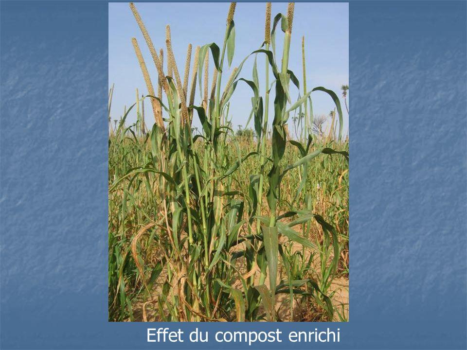 Effet du compost enrichi