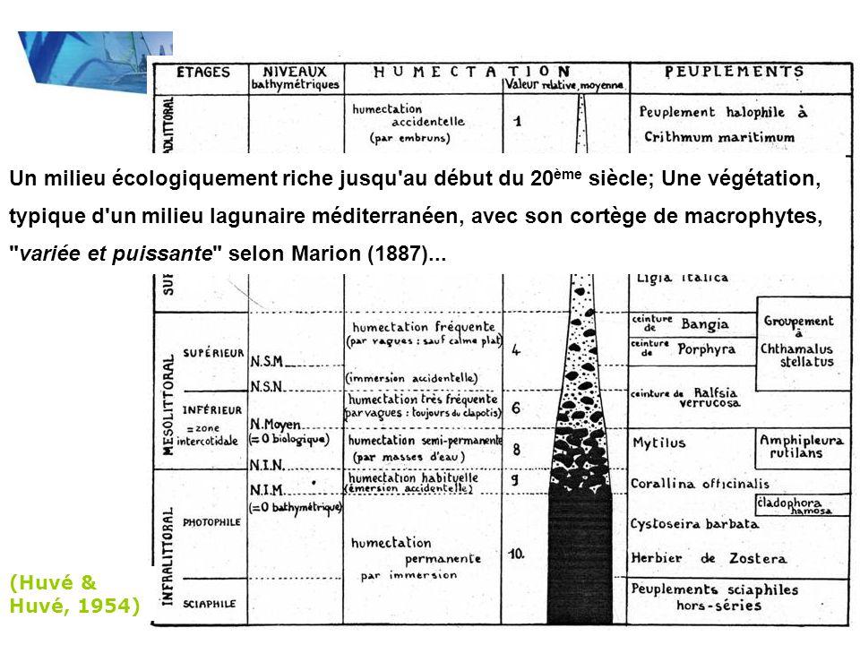 Espèces disparues après 1966 (Riouall, 1972) Déclin des Rhodobiontes au profit des Chlorobiontes nitrophiles/opportunistes