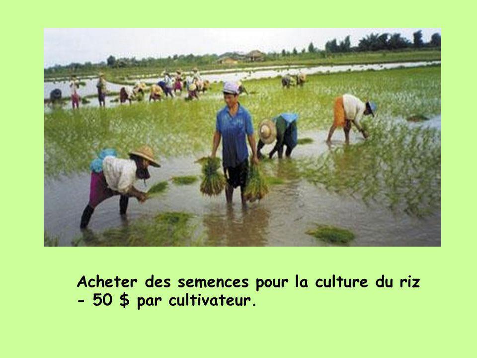 Acheter des semences pour la culture du riz - 50 $ par cultivateur.