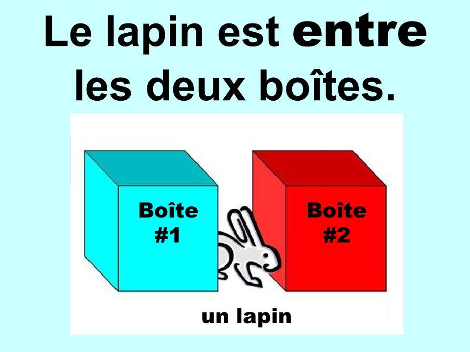 Le lapin est entre les deux boîtes. Boîte #1 Boîte #2 un lapin