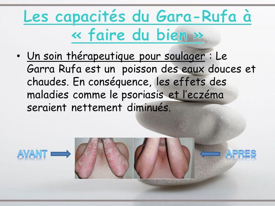 Un soin thérapeutique pour soulager : Le Garra Rufa est un poisson des eaux douces et chaudes. En conséquence, les effets des maladies comme le psoria
