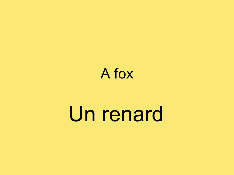 A fox Un renard