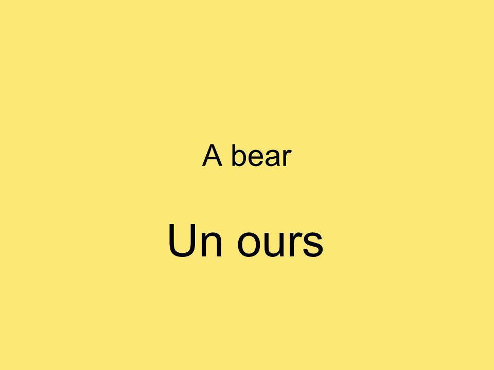 A bear Un ours