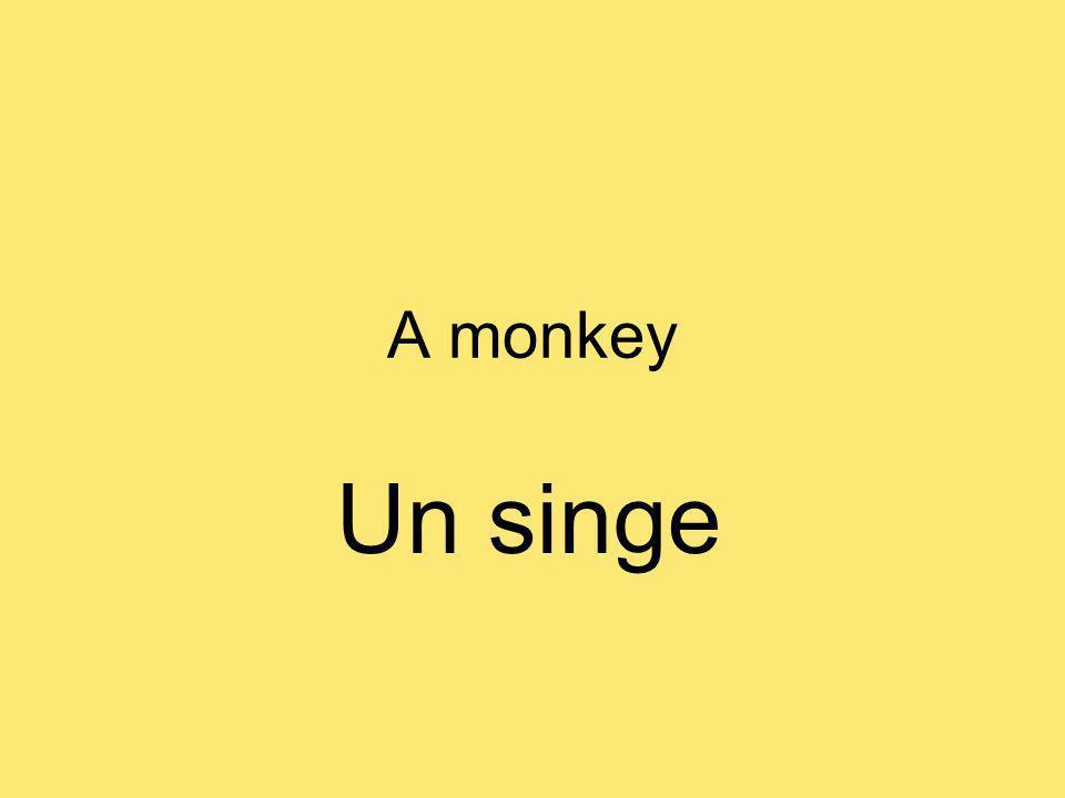 A monkey Un singe
