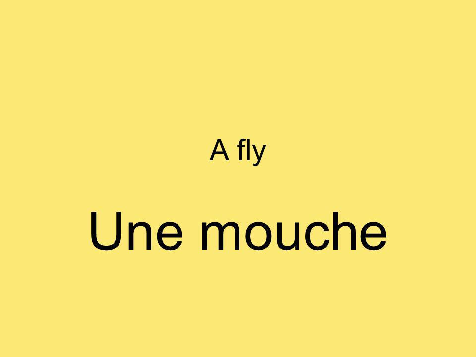 A fly Une mouche