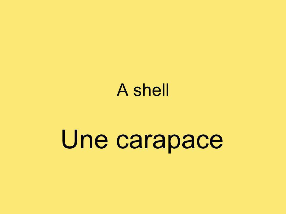 A shell Une carapace