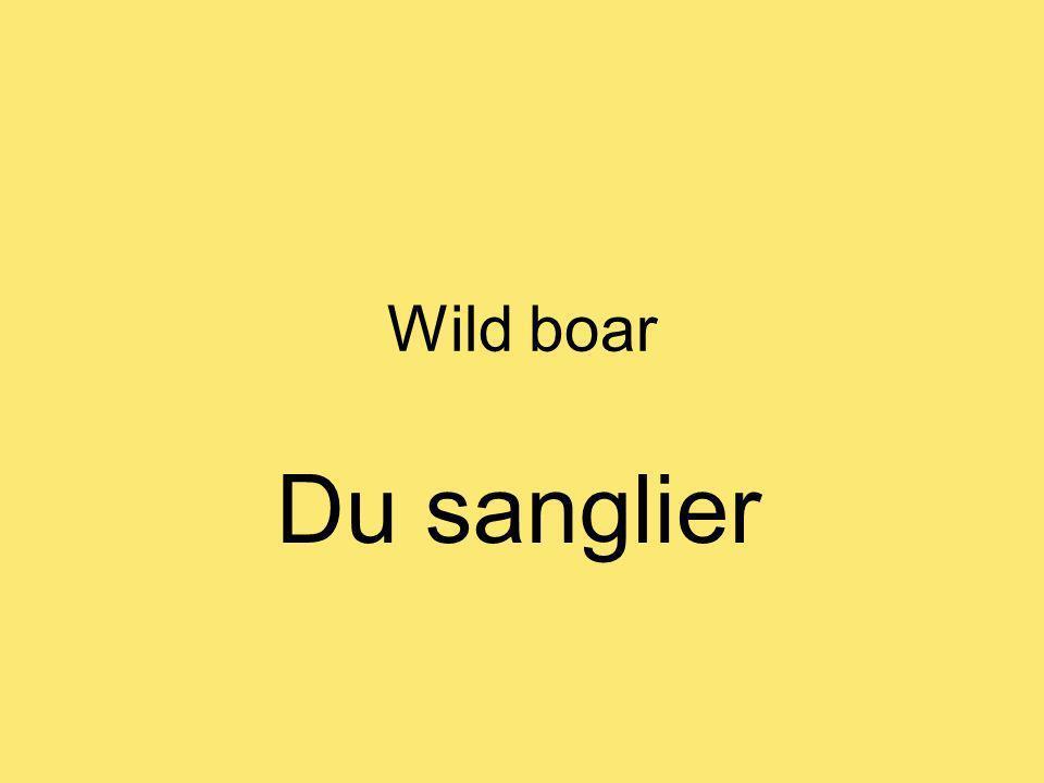 Wild boar Du sanglier
