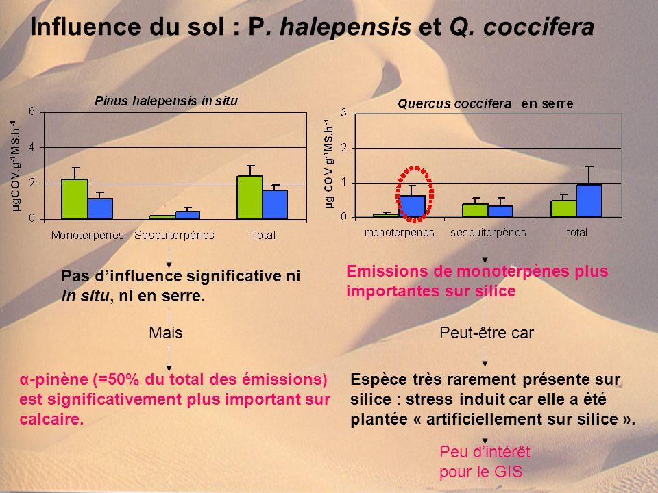 Influence du sol : P. halepensis et Q. coccifera Pas dinfluence significative ni in situ, ni en serre. Mais α-pinène (=50% du total des émissions) est
