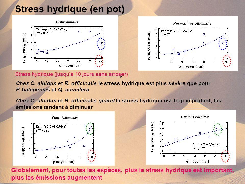 Stress hydrique (en pot) Globalement, pour toutes les espèces, plus le stress hydrique est important, plus les émissions augmentent Chez C. albidus et