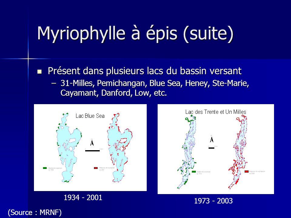 Myriophylle à épis (suite) Présent dans plusieurs lacs du bassin versant Présent dans plusieurs lacs du bassin versant –31-Milles, Pemichangan, Blue S