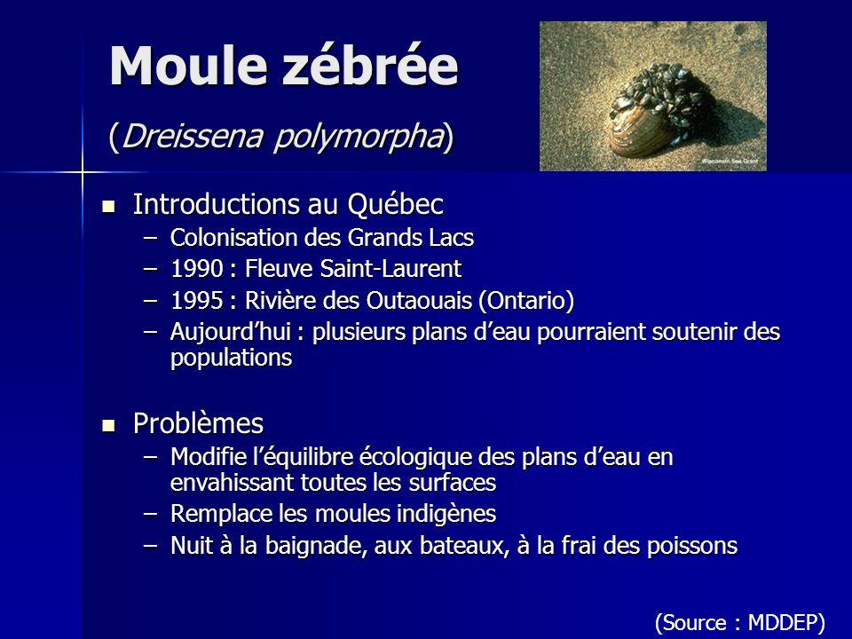 Moule zébrée (Dreissena polymorpha) Introductions au Québec Introductions au Québec –Colonisation des Grands Lacs –1990 : Fleuve Saint-Laurent –1995 :
