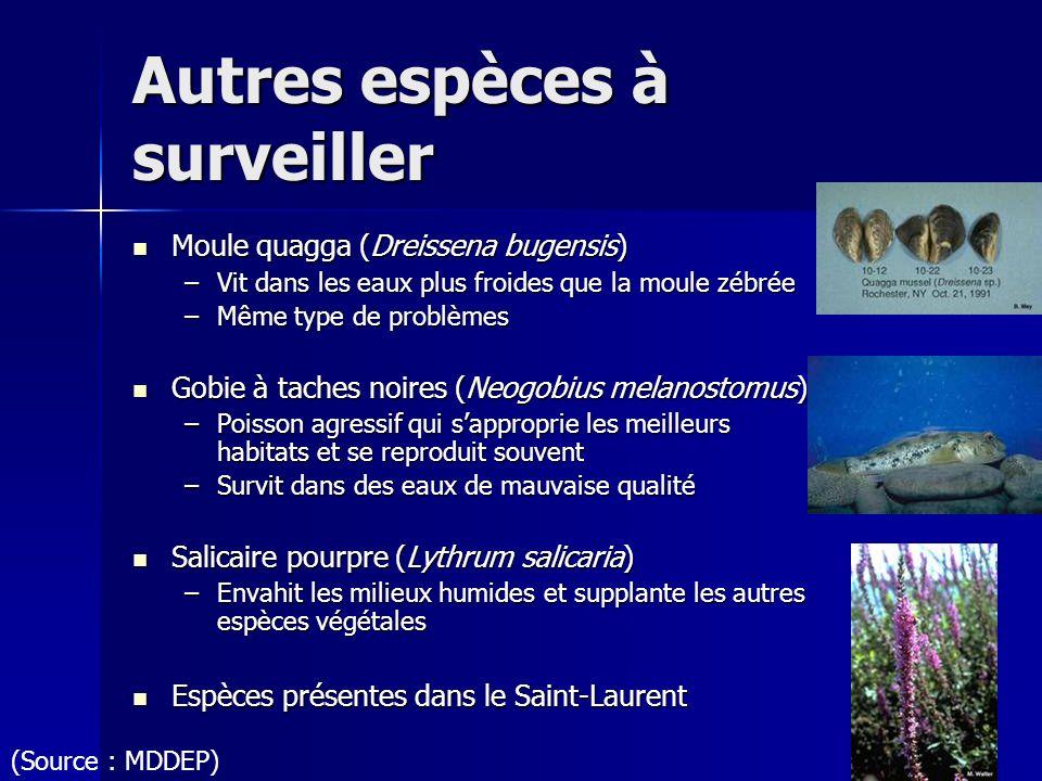 Autres espèces à surveiller Moule quagga (Dreissena bugensis) Moule quagga (Dreissena bugensis) –Vit dans les eaux plus froides que la moule zébrée –M