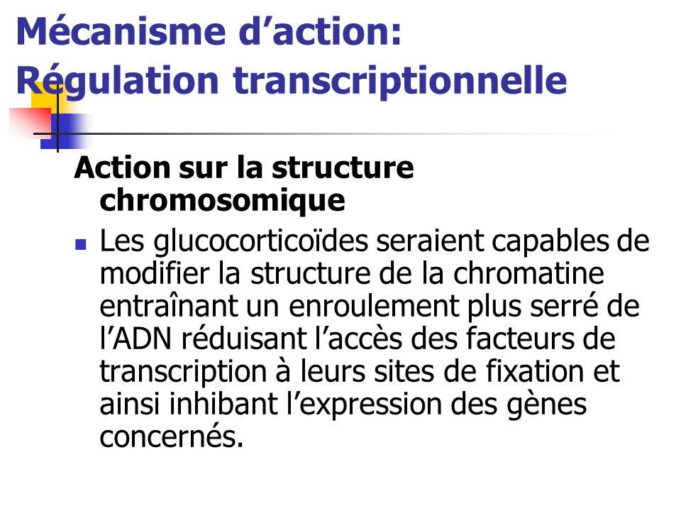 Mécanisme daction: Régulation transcriptionnelle Action sur la structure chromosomique Les glucocorticoïdes seraient capables de modifier la structure de la chromatine entraînant un enroulement plus serré de lADN réduisant laccès des facteurs de transcription à leurs sites de fixation et ainsi inhibant lexpression des gènes concernés.