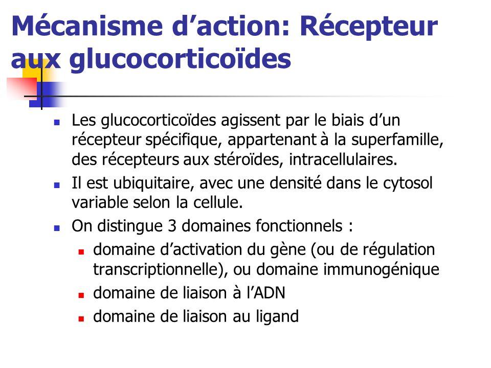 Mécanisme daction: Récepteur aux glucocorticoïdes Les glucocorticoïdes agissent par le biais dun récepteur spécifique, appartenant à la superfamille, des récepteurs aux stéroïdes, intracellulaires.