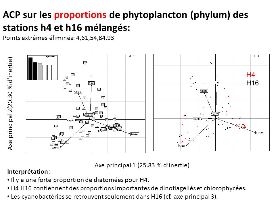 ACP sur les proportions de phytoplancton (phylum) des stations h4 et h16 mélangés: Points extrêmes éliminés: 4,61,54,84,93 Interprétation : Il y a une