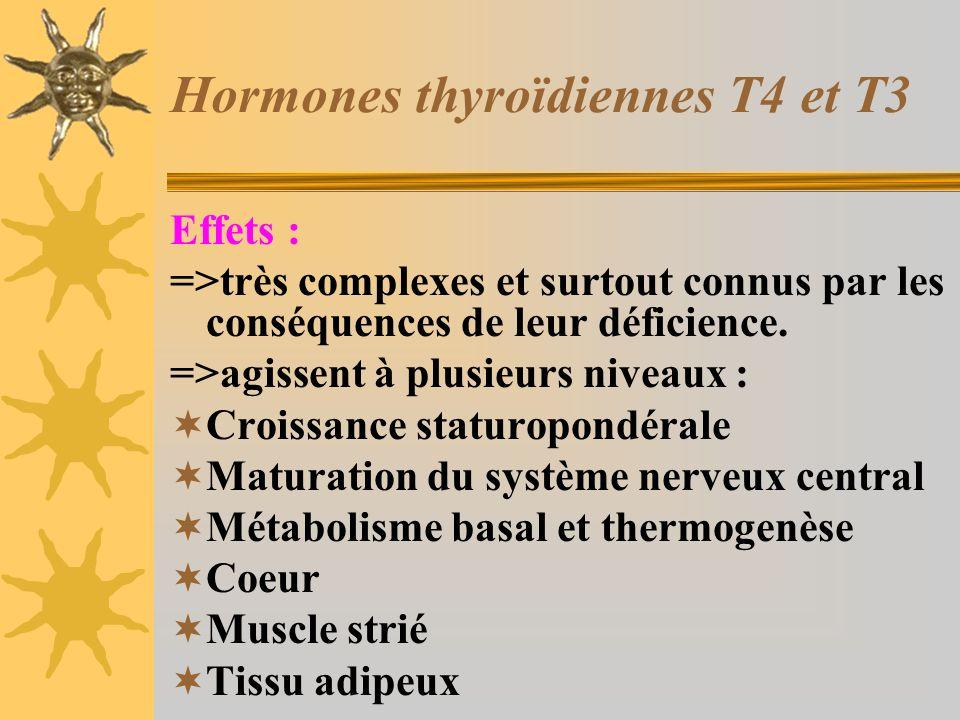 Hormones thyroïdiennes T4 et T3 Effets : =>très complexes et surtout connus par les conséquences de leur déficience. =>agissent à plusieurs niveaux :